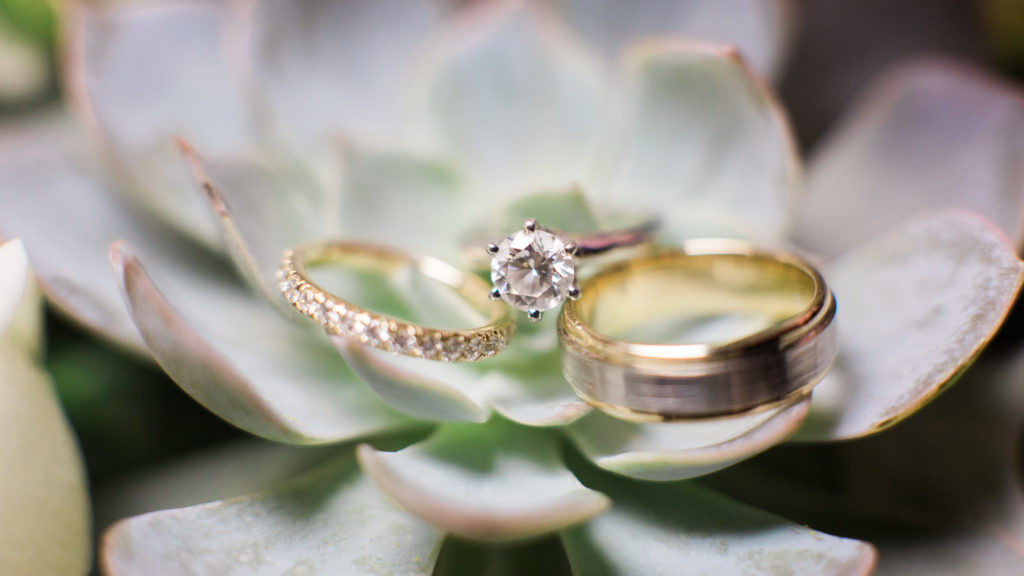 Wedding rings on succulents