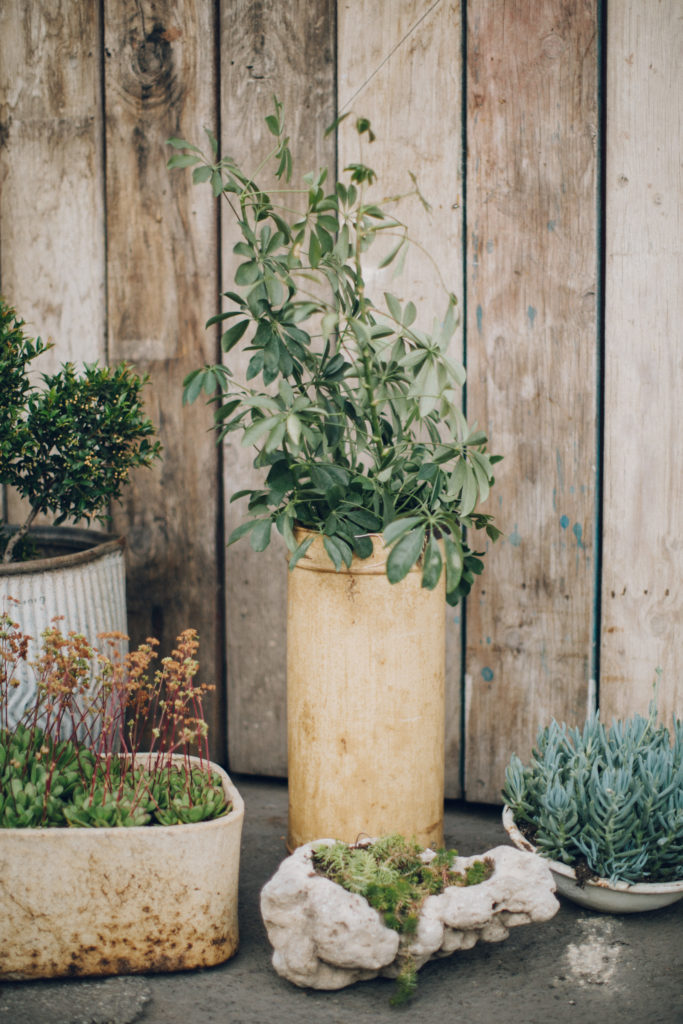 greenery and plants at big daddy's antiques wedding