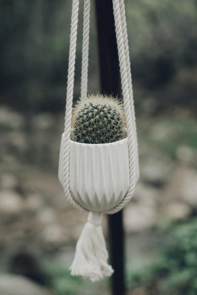 hanging succulents for ceremony arch